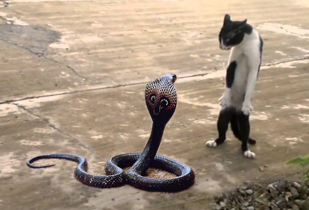 Cat Kills Big Snake